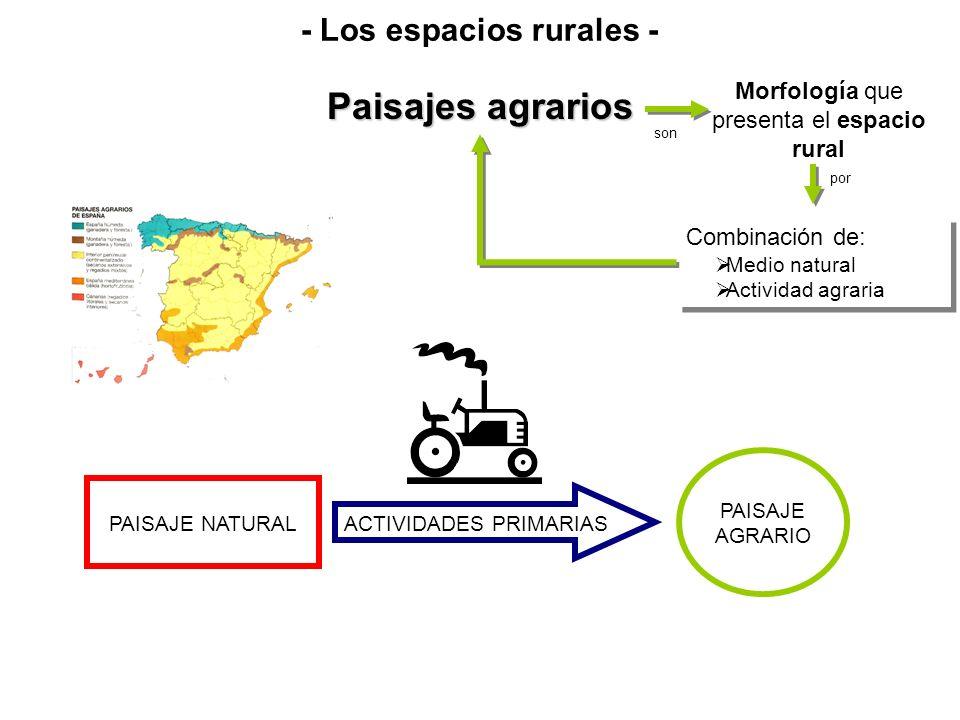 - Los espacios rurales -