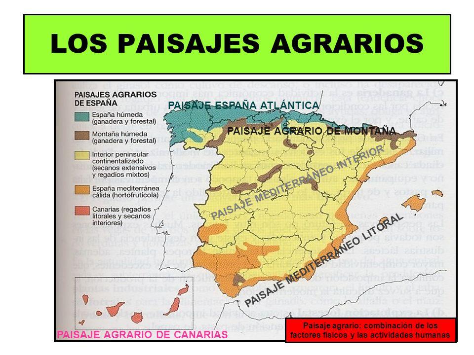 LOS PAISAJES AGRARIOS PAISAJE ESPAÑA ATLÁNTICA