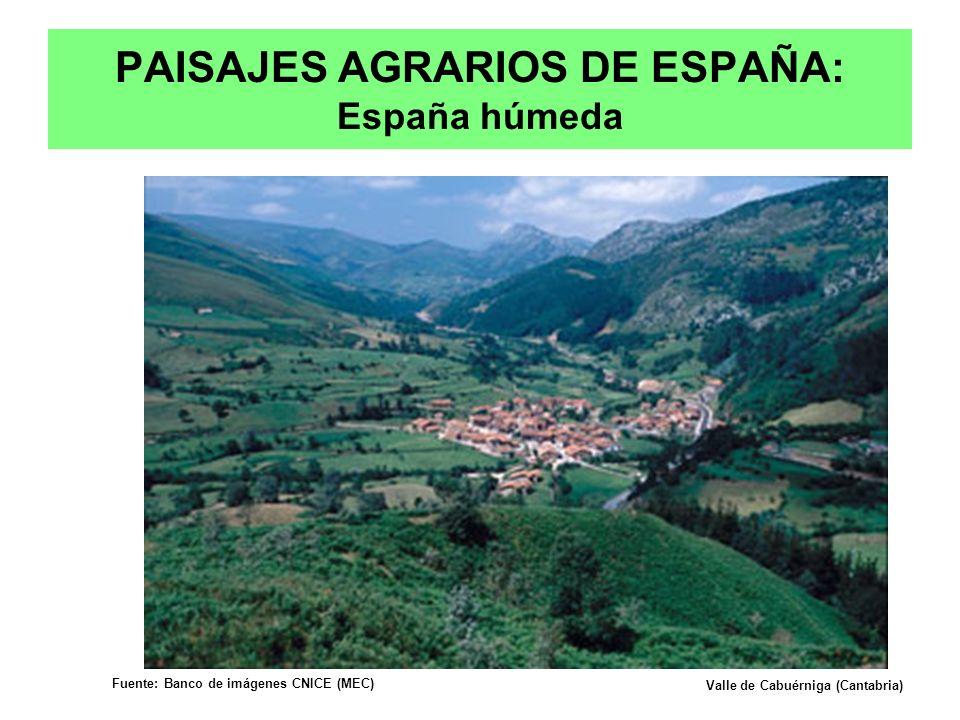PAISAJES AGRARIOS DE ESPAÑA: España húmeda