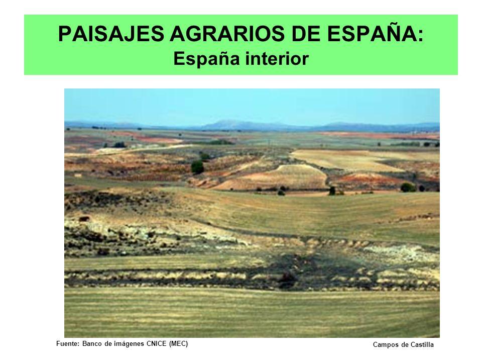 PAISAJES AGRARIOS DE ESPAÑA: España interior