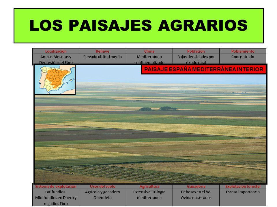 LOS PAISAJES AGRARIOS PAISAJE ESPAÑA MEDITERRÁNEA INTERIOR