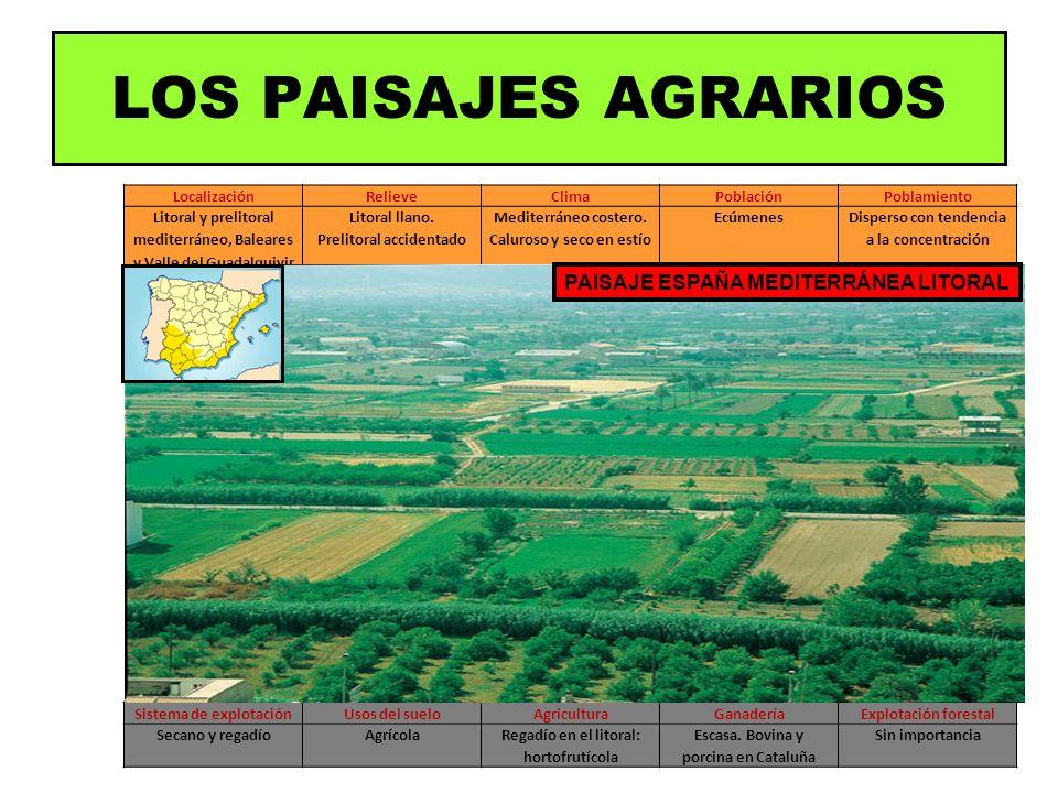 LOS PAISAJES AGRARIOS PAISAJE ESPAÑA MEDITERRÁNEA LITORAL Localización