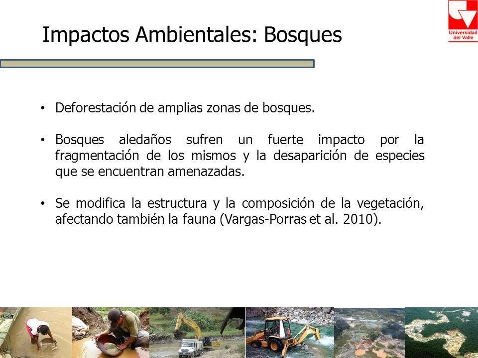 Impactos Ambientales: Bosques