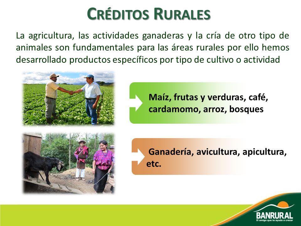 Créditos Rurales