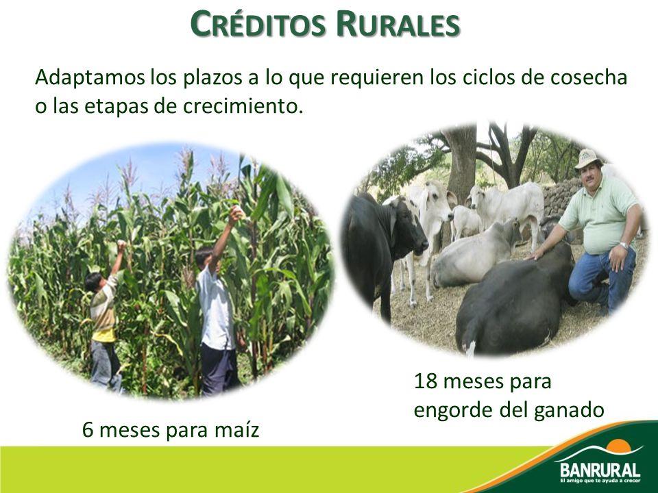 Créditos Rurales Adaptamos los plazos a lo que requieren los ciclos de cosecha o las etapas de crecimiento.