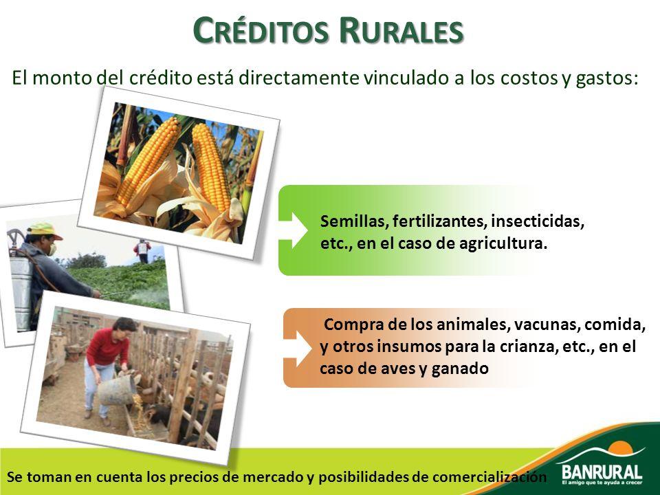 Créditos Rurales El monto del crédito está directamente vinculado a los costos y gastos: