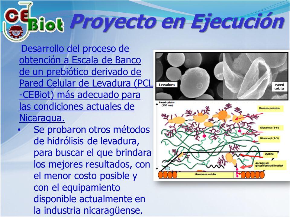 Proyecto en Ejecución