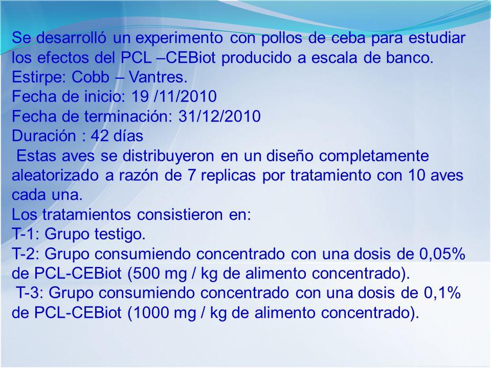 Se desarrolló un experimento con pollos de ceba para estudiar los efectos del PCL –CEBiot producido a escala de banco.