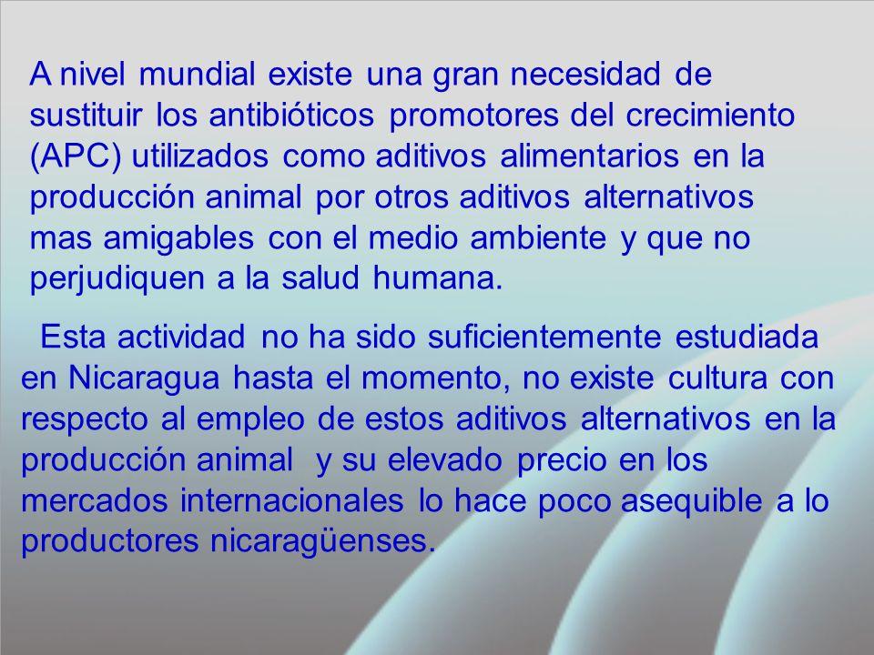 Esta actividad no ha sido suficientemente estudiada en Nicaragua hasta el momento, no existe cultura con respecto al empleo de estos aditivos alternativos en la producción animal y su elevado precio en los mercados internacionales lo hace poco asequible a lo productores nicaragüenses.