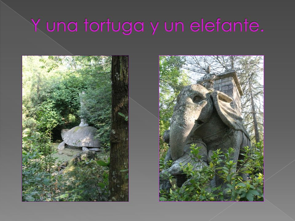 Y una tortuga y un elefante.