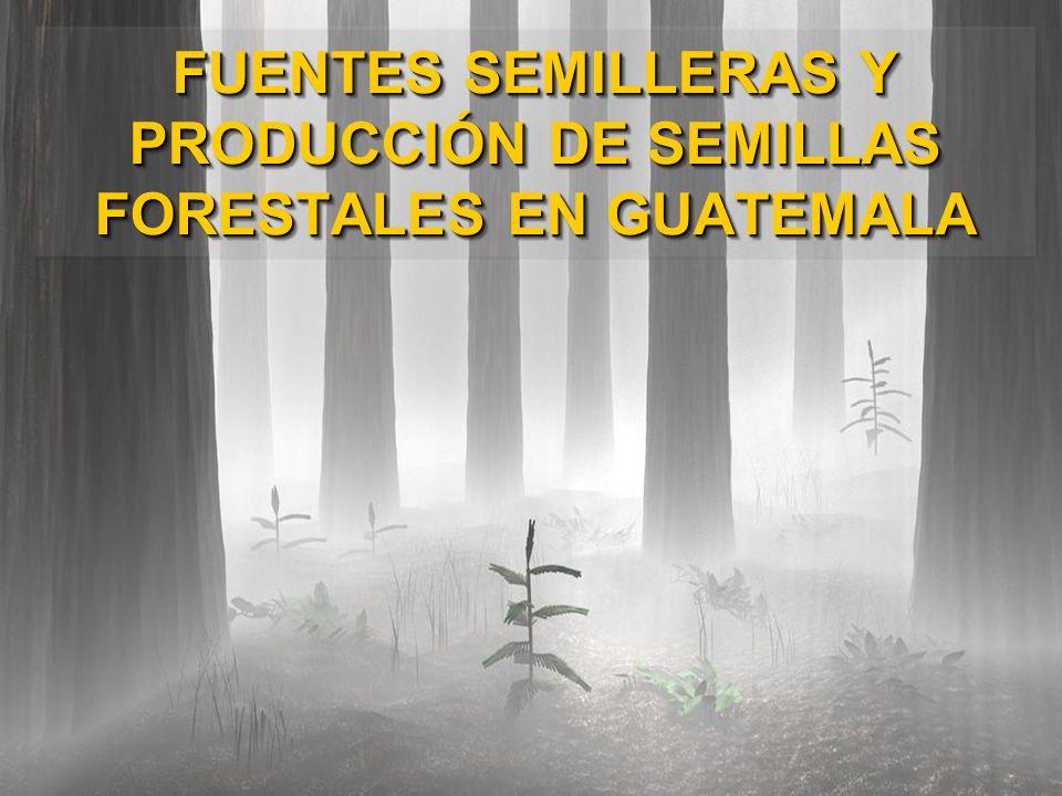 FUENTES SEMILLERAS Y PRODUCCIÓN DE SEMILLAS FORESTALES EN GUATEMALA