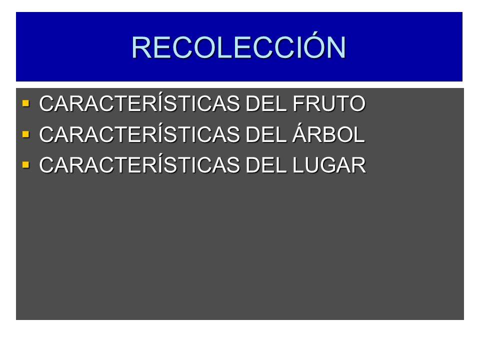RECOLECCIÓN CARACTERÍSTICAS DEL FRUTO CARACTERÍSTICAS DEL ÁRBOL