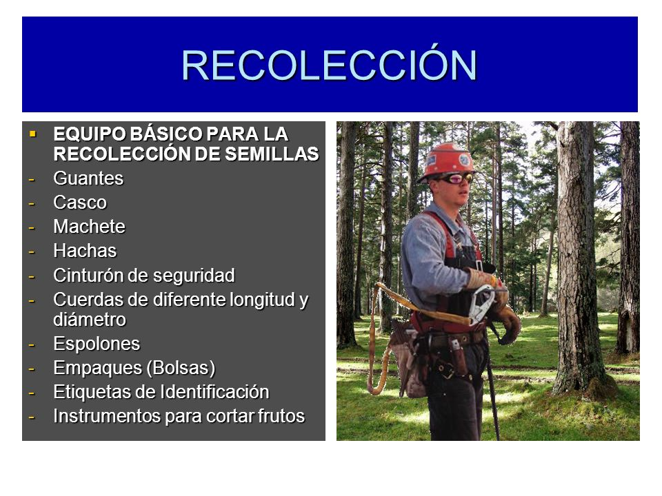 RECOLECCIÓN EQUIPO BÁSICO PARA LA RECOLECCIÓN DE SEMILLAS Guantes