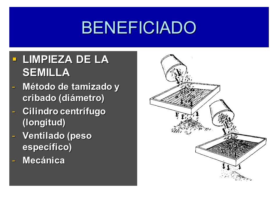 BENEFICIADO LIMPIEZA DE LA SEMILLA