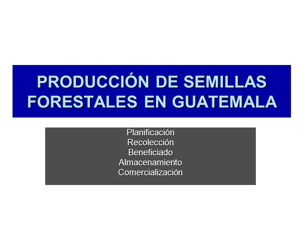 PRODUCCIÓN DE SEMILLAS FORESTALES EN GUATEMALA