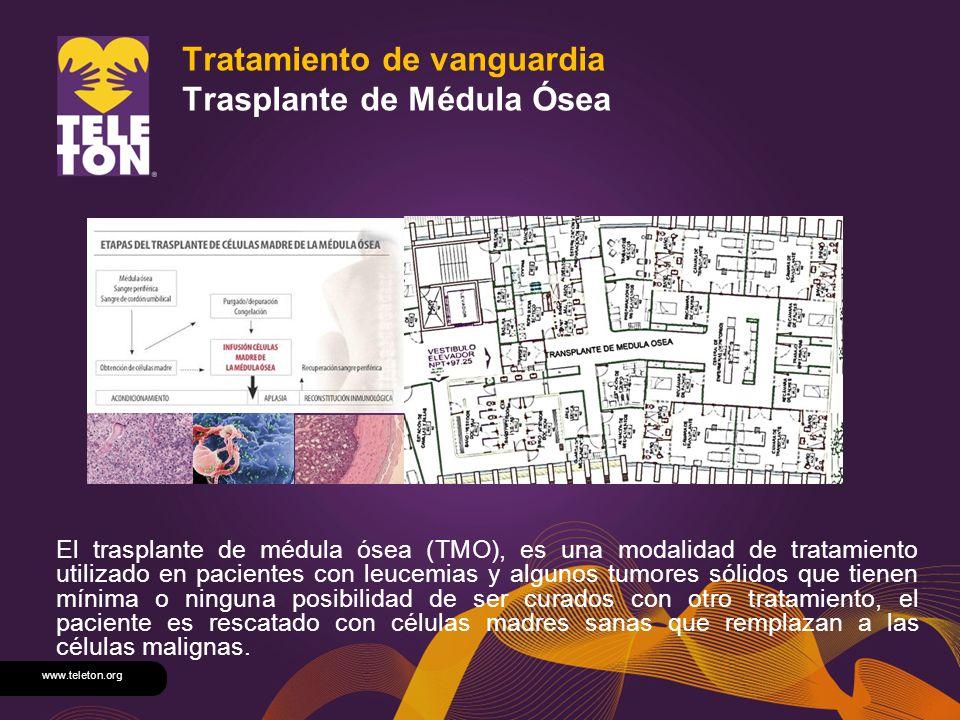 Tratamiento de vanguardia Trasplante de Médula Ósea