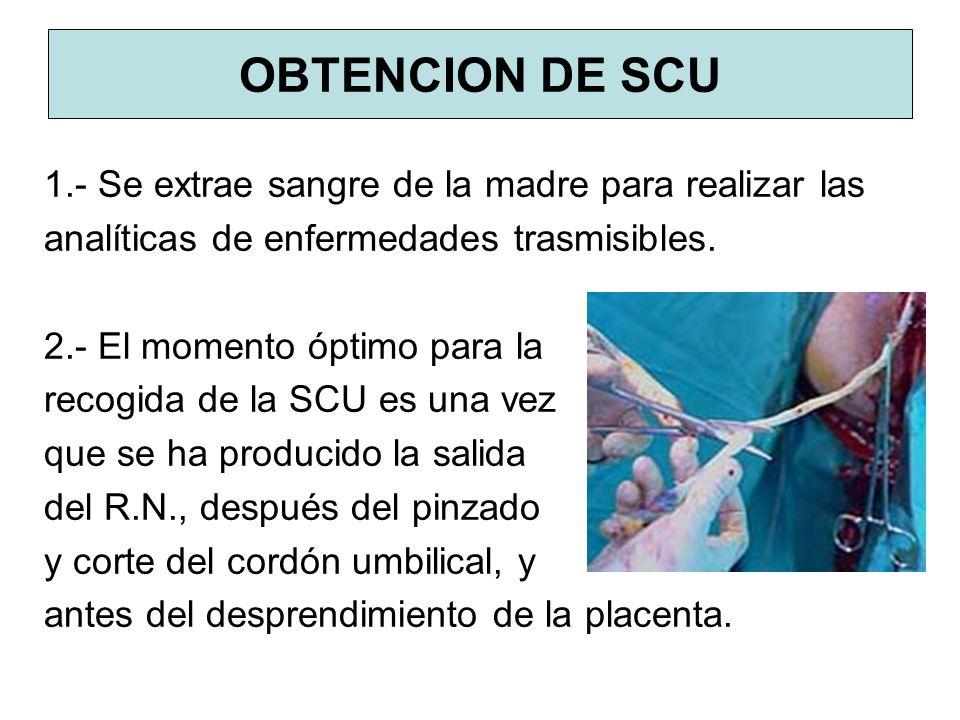 OBTENCION DE SCU 1.- Se extrae sangre de la madre para realizar las