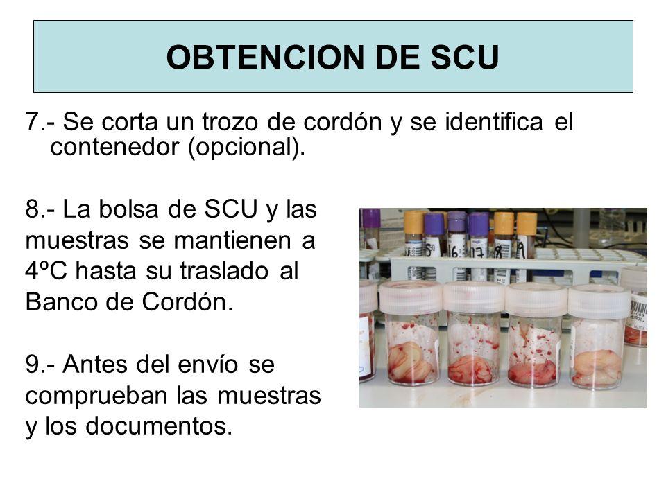 OBTENCION DE SCU 7.- Se corta un trozo de cordón y se identifica el contenedor (opcional). 8.- La bolsa de SCU y las.