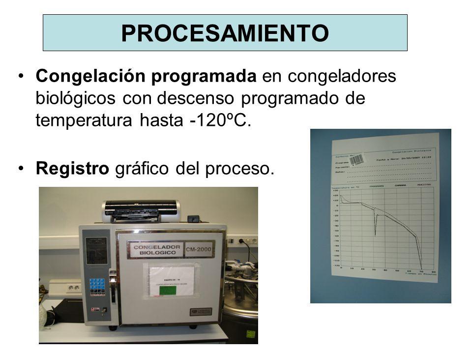 PROCESAMIENTO Congelación programada en congeladores biológicos con descenso programado de temperatura hasta -120ºC.