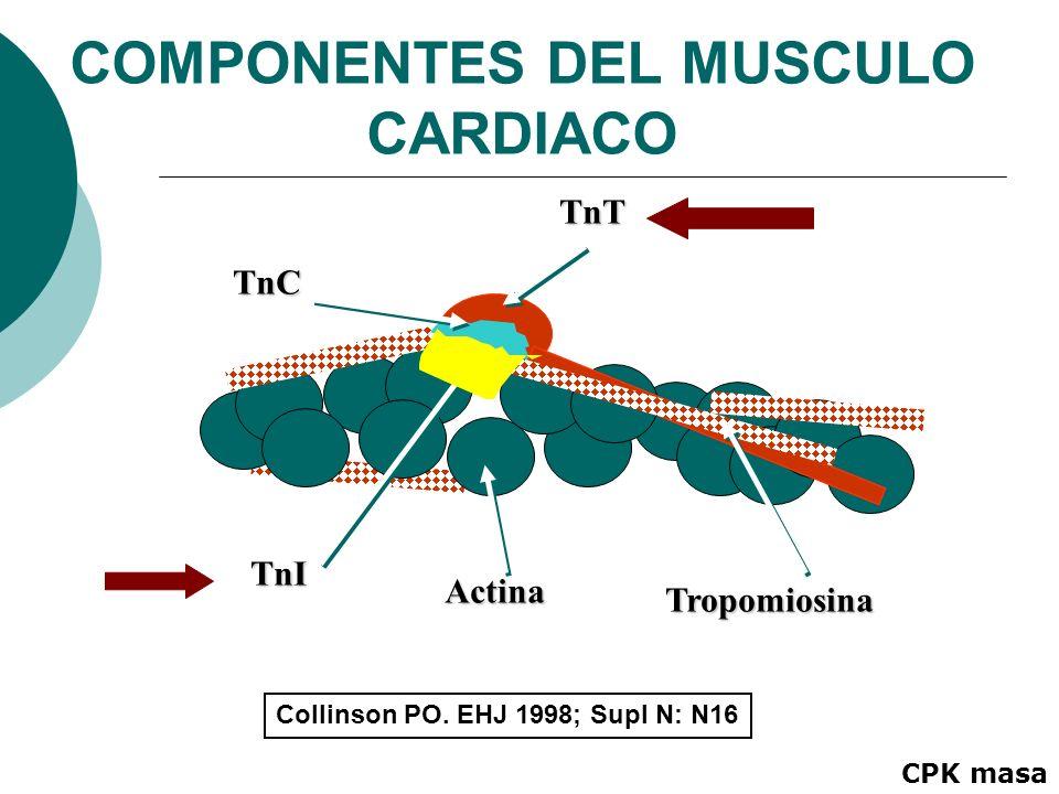 COMPONENTES DEL MUSCULO CARDIACO