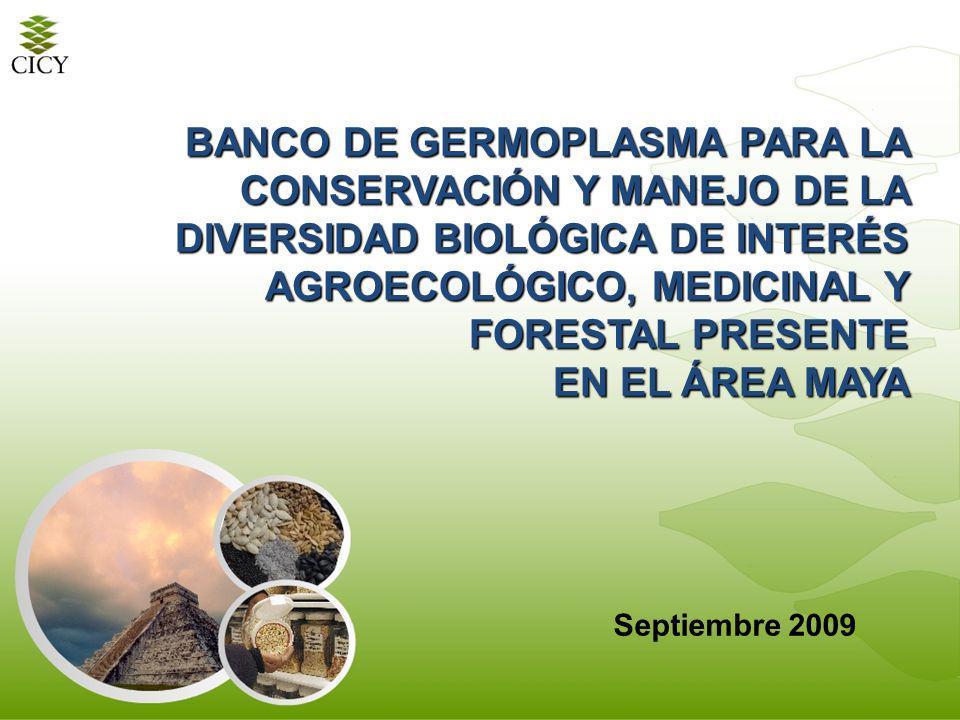 BANCO DE GERMOPLASMA PARA LA CONSERVACIÓN Y MANEJO DE LA DIVERSIDAD BIOLÓGICA DE INTERÉS AGROECOLÓGICO, MEDICINAL Y FORESTAL PRESENTE EN EL ÁREA MAYA