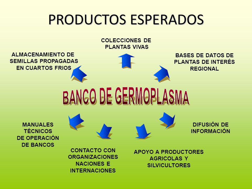 PRODUCTOS ESPERADOS BANCO DE GERMOPLASMA ALMACENAMIENTO DE