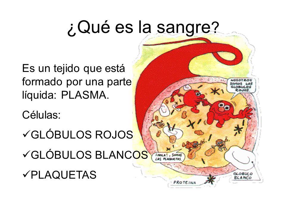 ¿Qué es la sangre Es un tejido que está formado por una parte líquida: PLASMA. Células: GLÓBULOS ROJOS.