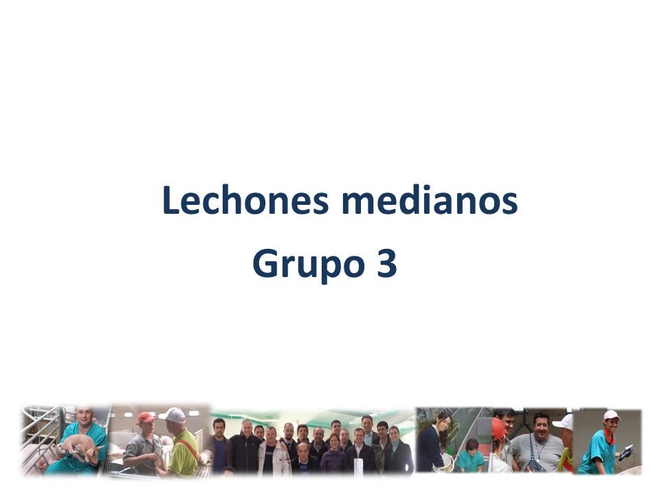 Lechones medianos Grupo 3