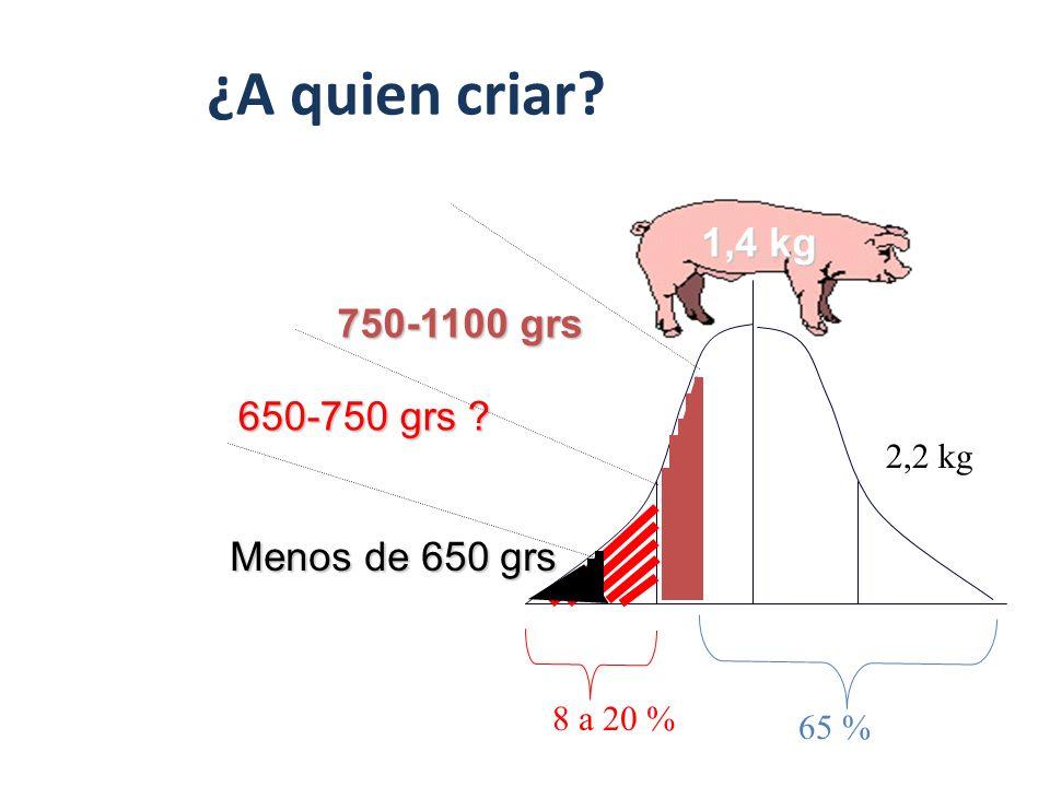 Edad al Destete: ¿A quien criar . 1,4 kg 750-1100 grs 650-750 grs