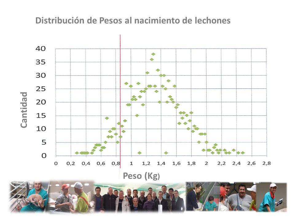 Distribución de Pesos al nacimiento de lechones