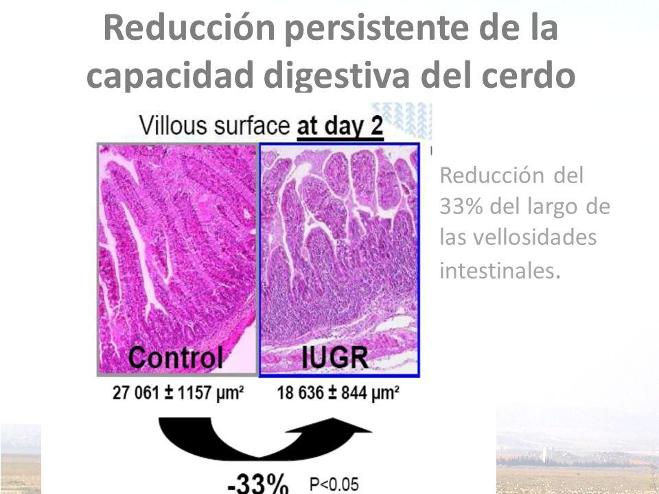 Reducción persistente de la capacidad digestiva del cerdo
