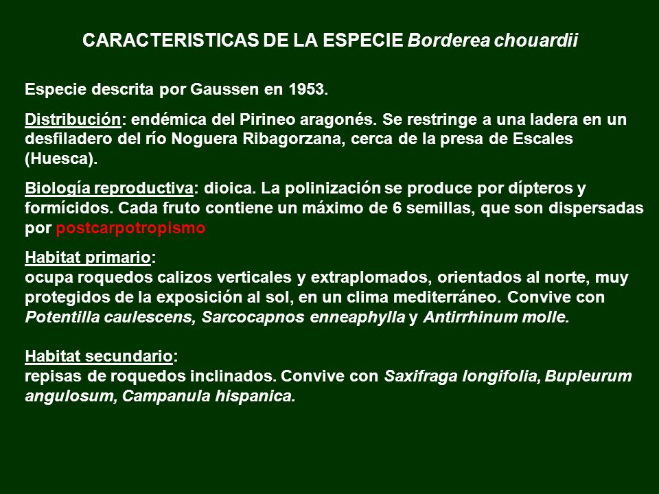 CARACTERISTICAS DE LA ESPECIE Borderea chouardii