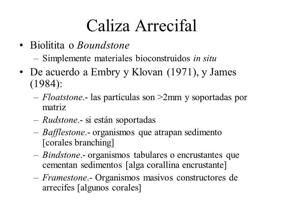 Caliza Arrecifal Biolitita o Boundstone