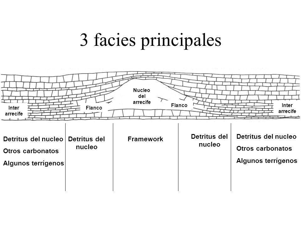 3 facies principales Detritus del nucleo Detritus del nucleo