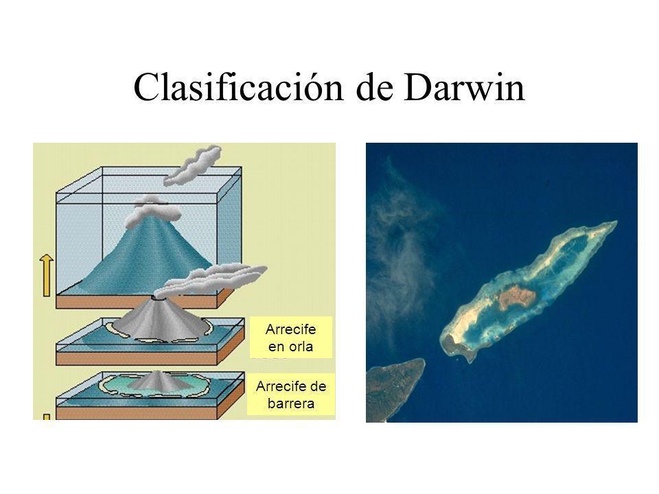 Clasificación de Darwin