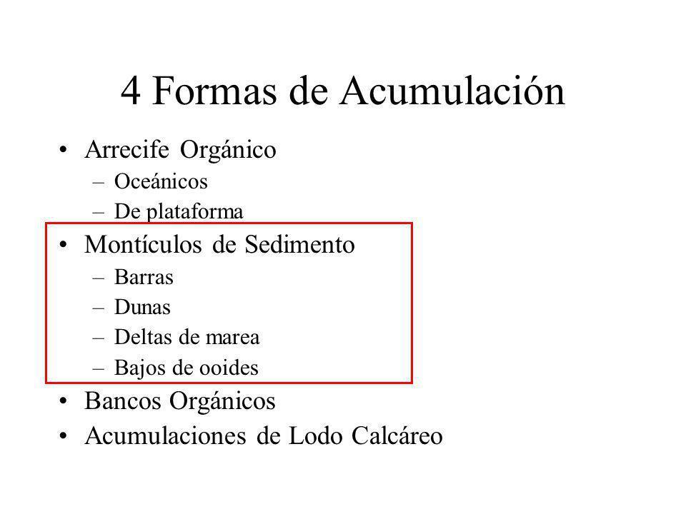4 Formas de Acumulación Arrecife Orgánico Montículos de Sedimento