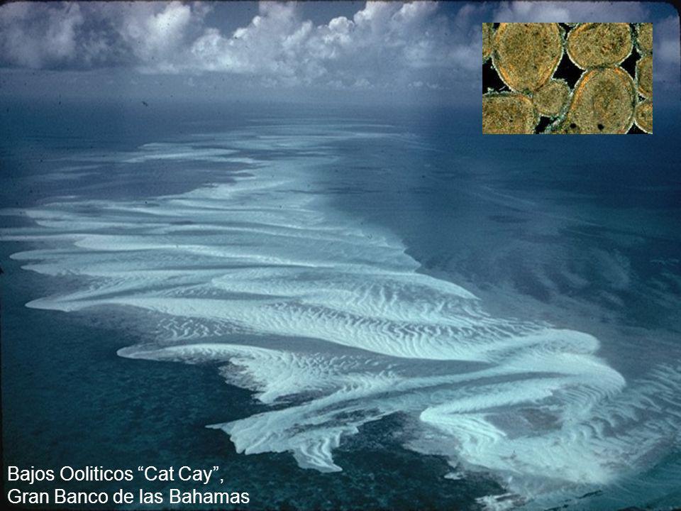 Bajos Ooliticos Cat Cay , Gran Banco de las Bahamas