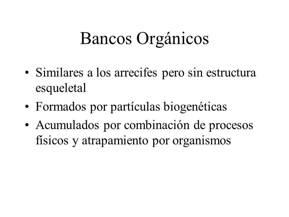 Bancos Orgánicos Similares a los arrecifes pero sin estructura esqueletal. Formados por partículas biogenéticas.