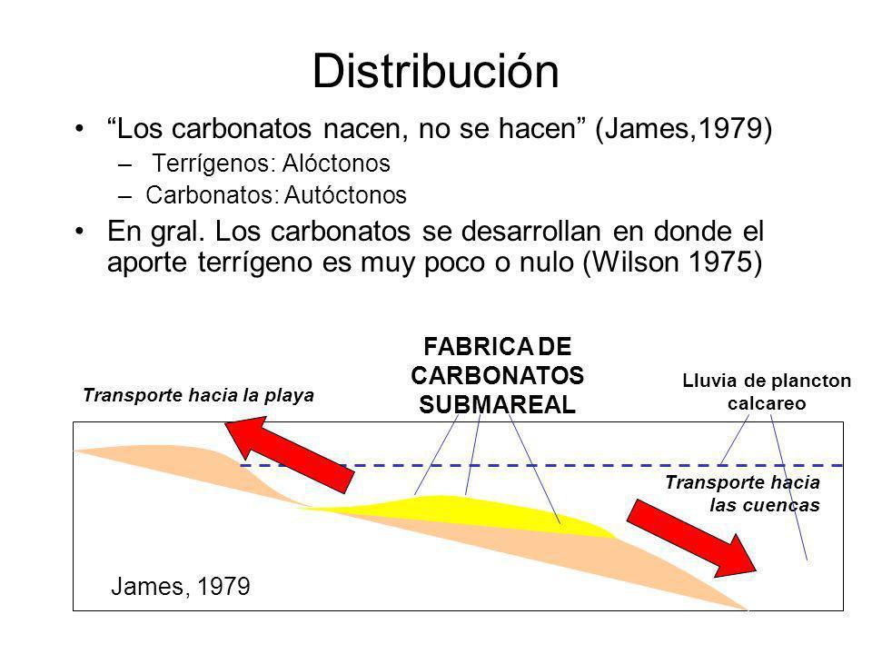 Lluvia de plancton calcareo FABRICA DE CARBONATOS SUBMAREAL