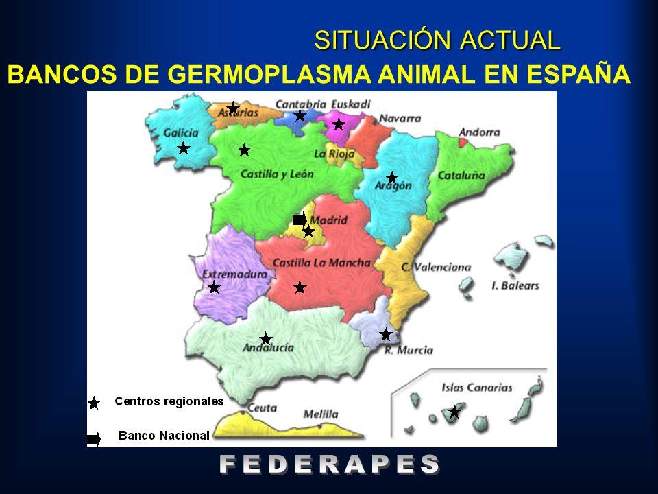 SITUACIÓN ACTUAL BANCOS DE GERMOPLASMA ANIMAL EN ESPAÑA FEDERAPES