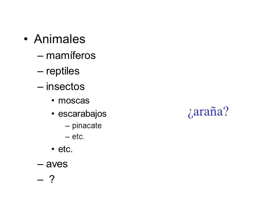 ¿araña Animales mamíferos reptiles insectos aves moscas escarabajos