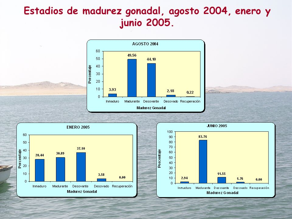 Estadios de madurez gonadal, agosto 2004, enero y junio 2005.