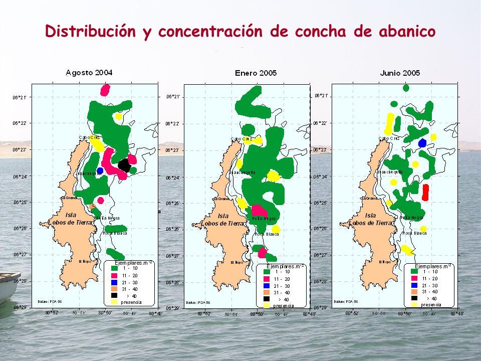 Distribución y concentración de concha de abanico