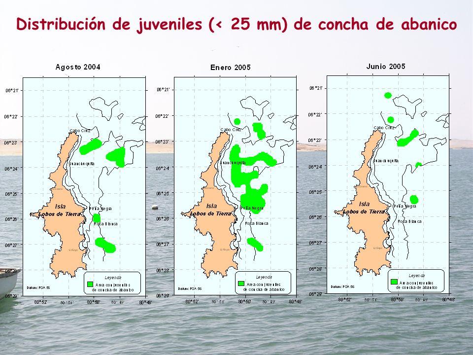 Distribución de juveniles (< 25 mm) de concha de abanico