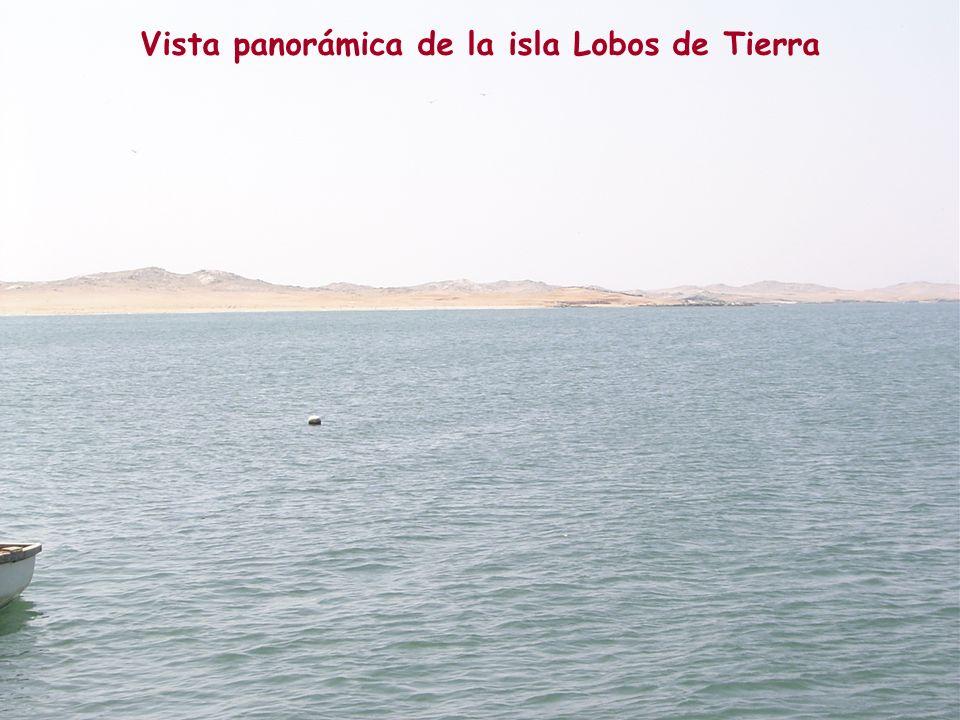 Vista panorámica de la isla Lobos de Tierra