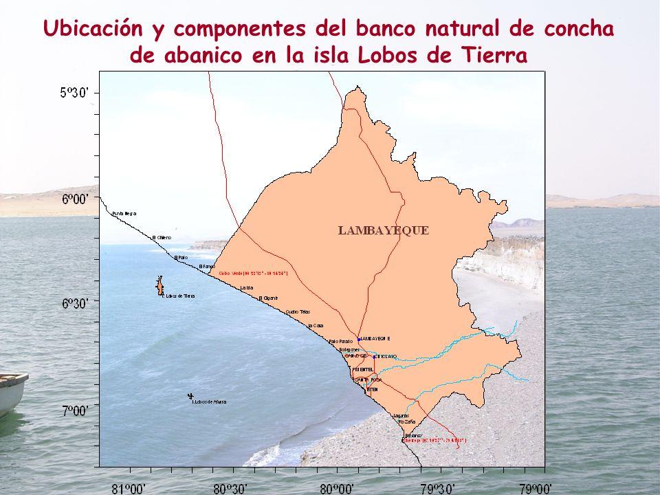Ubicación y componentes del banco natural de concha de abanico en la isla Lobos de Tierra
