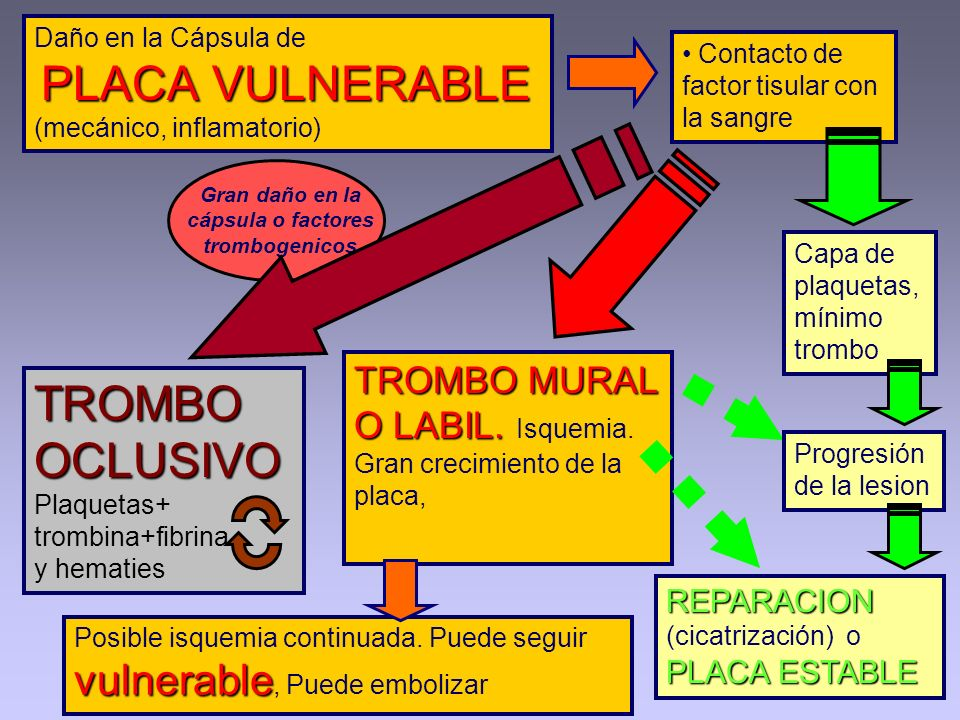 Daño en la Cápsula de PLACA VULNERABLE (mecánico, inflamatorio)