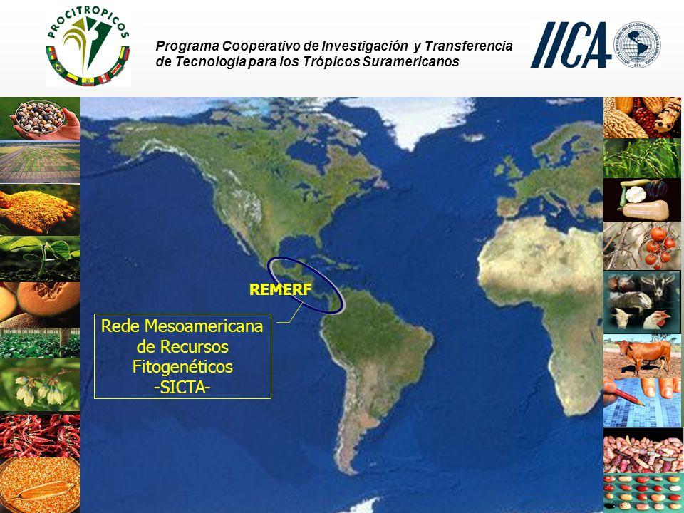 Rede Mesoamericana de Recursos Fitogenéticos -SICTA-
