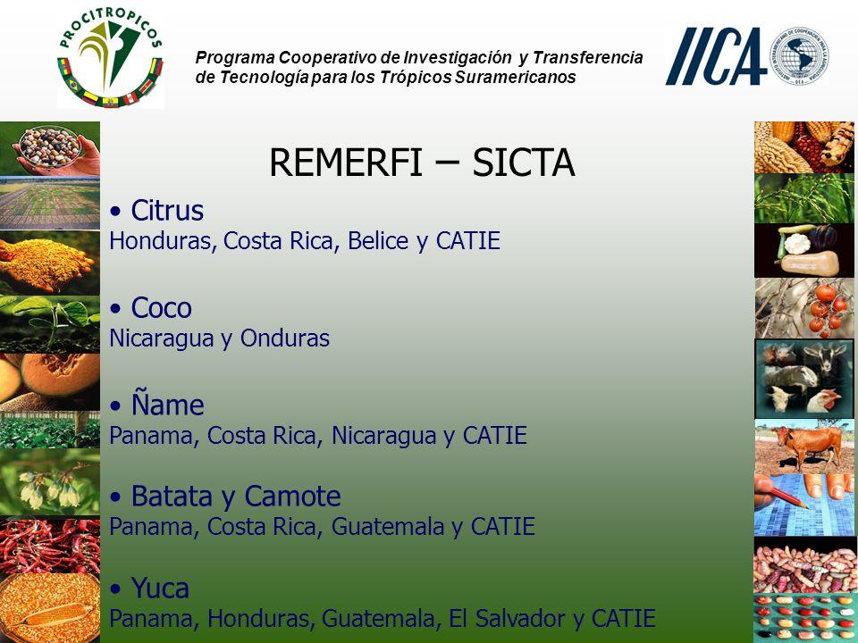 REMERFI – SICTA Citrus Coco Ñame Batata y Camote Yuca