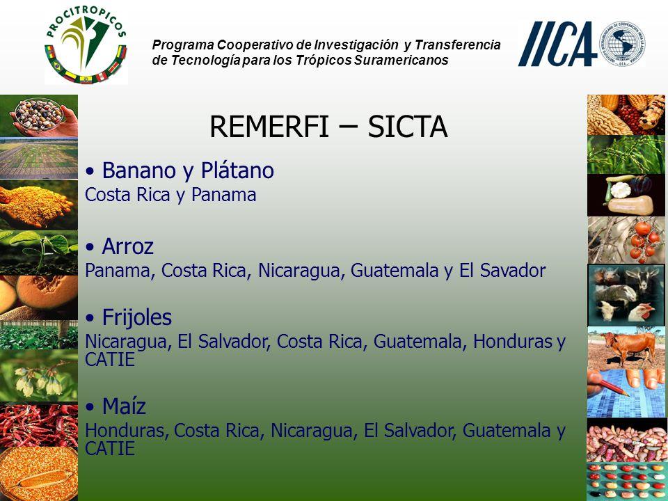 REMERFI – SICTA Banano y Plátano Arroz Frijoles Maíz